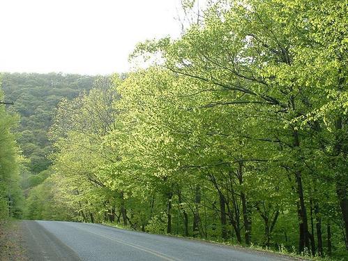 Nameless Road Near Ashokan