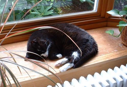 Minky Asleep