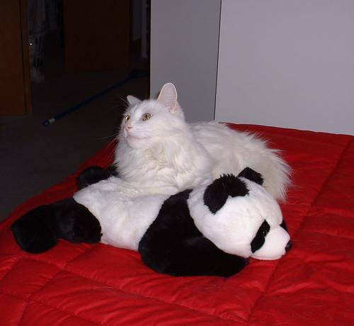 Puck and His Panda