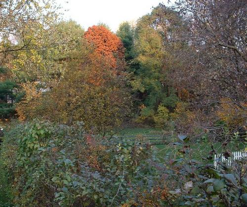 10.  View Across the Lilac Hedge in the Fall
